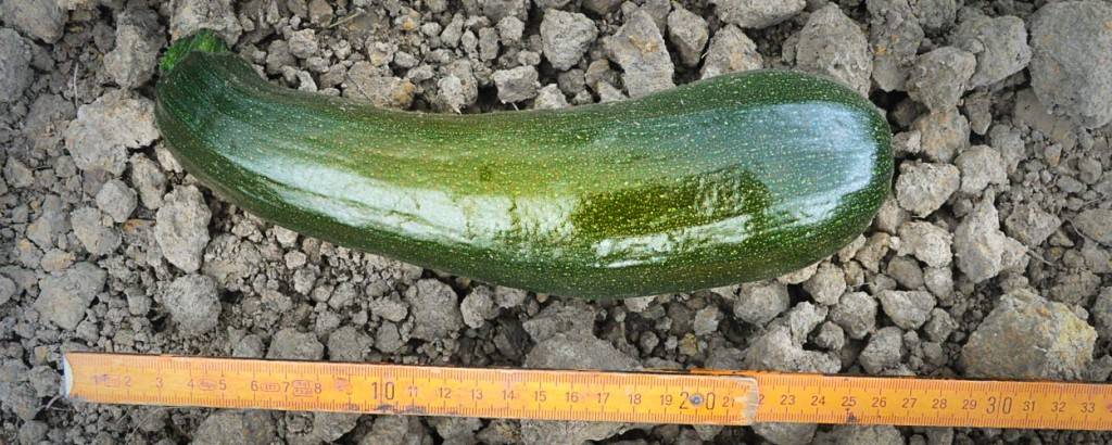 courgette (1 of 1)