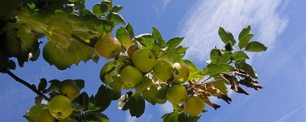 appels (1 of 1)-2